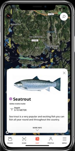 sea trout showcase